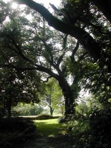 Eve's Garden, Texas